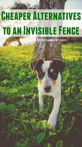 What Are The Cheaper Alternatives To Invisible Fence? - One ... Its Going To Weird Some People Out A New Company Will Compost How Do I Keep My Backyard Free Of Murdered Possums Vermin Amazoncom 100 Wireless Pet Coainment System Wifi Radio Dog 39 Best Dealing With Loss Images On Pinterest Loss Man Admits Shooting And Burying Dog In Westside Jacksonville Bunny Rabbit Chases Around The Yard Youtube Backyard Playground Ideas For Your What Do Your Pets Remains After Death Where Bury Dead Pets Or Animals Bengaluru Citizen Matters Burying 2 Monthsold Bunny Doggie Solution Dogs Ideas