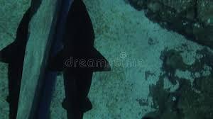 Small Shark Swimming Under Glass Floor In Oceanarium Stock Footage