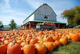 Pumpkin Patch Near Nolensville Tn by Nashville Area Pumpkin Farms