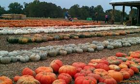 Pumpkin Patch Yuma Az Hours by Fall Activities In Clarksville Near Ft Campbell Military Town