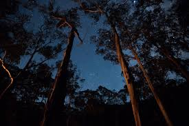 100 Lerderderg State Park S Victoria On Twitter Photo Of The Week Night Sky Along The