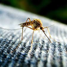 mücken effektiv bekämpfen lästige stechmücken effektiv