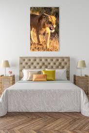 African Queen Lion Safari Wall Art