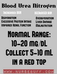 the blood urea nitrogen or bun is a blood test that measures the