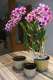 blumentöpfe blumentopf übertopf wohnzimmer wintergarten frühjahr