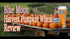 Harvest Moon Pumpkin Ale by Blue Moon Harvest Pumpkin Wheat Review Youtube