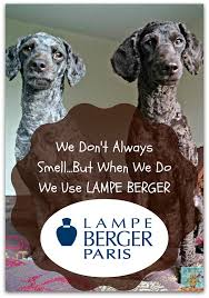 Lampe Berger Oils Toxic by Dogs Vs Lampe Berger The Taming Of The Stink