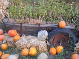 Types Of Pumpkins And Squash by The Great Pumpkin Hunt