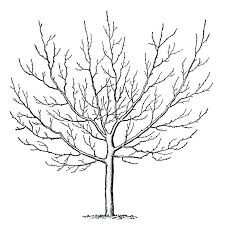 winter tree coloring page winter tree coloring page vintage clip art winter trees the graphics fairy
