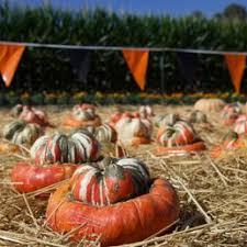 San Jose Pumpkin Patch 2017 by Photos For Spina Farms Pumpkin Patch Yelp