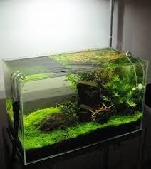 Terrarium Design astonishing petco 50 gallon tank Aquarium 50