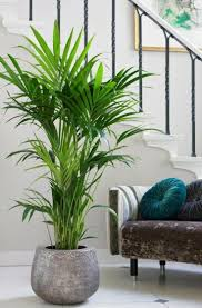 schöne wohnzimmer blumen pflanzen wohnzimmer pflanzen