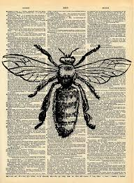 Drawn Insect Art 2