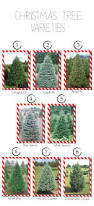 Christmas Tree Types Oregon by 11 Best Eco Friendly Products Images On Pinterest Eco Friendly