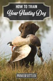 Dog Breeds That Dont Shed Uk by Best 25 Hunting Dogs Ideas On Pinterest Duck Hunting Dogs