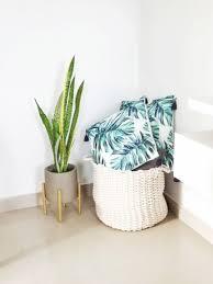 die besten pflanzen fürs schlafzimmer my jungle