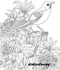 Bird Singing Song Among Flowers And Greenery Beautiful Scenery Coloring Page For Girls Adults