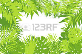 Summer Tropical Palm Tree Leaves Background Vector Grunge Design For Card Posterwallpaper