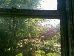 Flying Ants In Bathroom Window by Flying Ants Rachael Ray