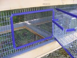 Homemade Rabbit Cage. The Door With A Hay Rack Attacked -I Like ... Learn How To Build A Rabbit Hutch With Easy Follow Itructions Plans For Building Cages Hutches Other Housing Down On 152 Best Rabbits Images Pinterest Meat Rabbits Rabbit And 106 Barn 341 Bunnies Pet House Our Outdoor Housing Story Habitats Tails Hutch Hutches At Cage Source Best 25 Shed Ideas Bunny Sheds Shed Amazoncom Petsfit 425 X 30 46 Inches Cages Exterior Cstruction Nearly Complete Resultado De Imagem Para Plans Row Barn Planos Celeiro