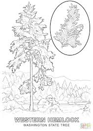 Coloring Page Magic Tree House Click State Pages View Of Life Mandala Branch Large Size
