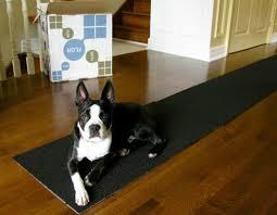 Sheet Vinyl Flooring Menards by 100 Menards Carpet Tile Carpet Tile Adhesive Menards Carpet