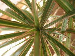 entretien plante grasse d interieur l entretien des plantes grasses d intérieur