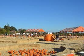 San Jose Pumpkin Patch 2017 by Garlic Spina Farms San Jose Ca Picture Of Spina Farms Pumpkin