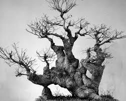 Download Chinese Bonsai ArtAbstract Tree Roots Stock Image