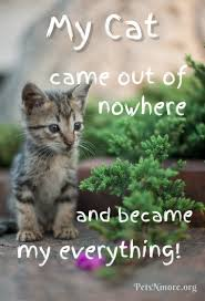 cat quotes pets n more top cat quotes