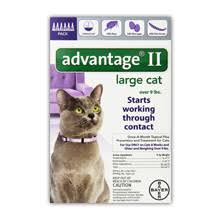 flea treatment for cats advantage ii flea treatment for cats review