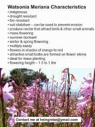 flower bulb information 2015 watsonia sale from 10c per