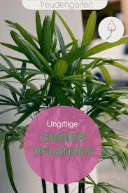 ungiftige zimmerpflanzen ungiftige zimmerpflanzen