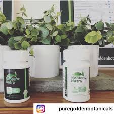 Neoteric Nutra (neotericnutra) On Pinterest Strong 500mg Forskolin Extract For Weight Loss Pure Walmartcom Banking Nopcrm Customer Natural Nutra Probiotic Quattro Supplement Men And Women 4 Strains Ltobacillus Nutrathrive Hash Tags Deskgram Sales Deals Tomlyn Nutrical Dogs Petco Gi Fortify 141 Oz 400 Grams Lindocat White Clumping 15 L Cat Litter 10 Off Oil Life Coupons Promo Discount Codes Wethriftcom