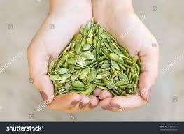Go Raw Pumpkin Seeds Green by Pumpkin Seeds Kernel Woman Hands Forming Stock Photo 122391097