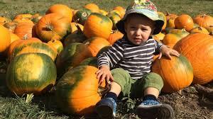 Colorado Pumpkin Patch by Pumpkin Patch U0026 Harvest Festival Salida Colorado Youtube