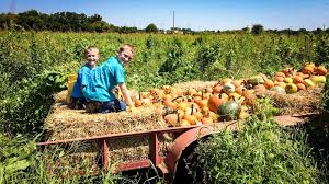 Pumpkin Patch Fayetteville Arkansas by Frog Bayou Farms Home