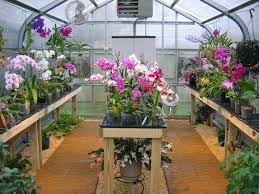 Sturdi Built Sheds Rochester Ny by 20 Best Greenhouse Images On Pinterest Greenhouse Ideas