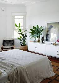 plante dans chambre à coucher la décoration d intérieur avec de grandes plantes d intérieur