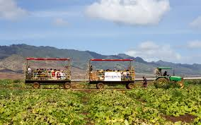 Waimanalo Pumpkin Patch Oahu by Farm Exploration Hawaii