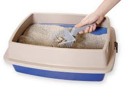 best cat litter boxes top 10 best self cleaning litter box for cats in 2017