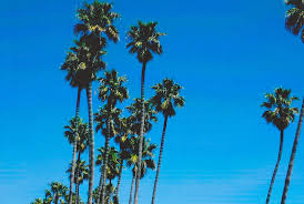 Palm Trees Tumblr Vertical La Pretty Tree
