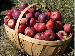 Free Pumpkin Patch In Fredericksburg Va by Where To Pick Your Own Apples Near Fredericksburg Fredericksburg