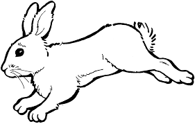 Rabbit Coloring Pages Jumping