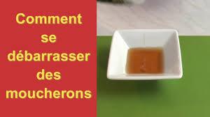 moucherons cuisine comment se débarrasser des moucherons pratiks