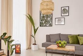 kokospalme pflegen keimlinge gießen erde braune blätter