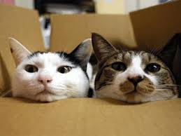 cat in house moving house settling your cat into a new house vetwest animal