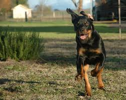 Dogs That Shed The Least by Dog Run Ideas How To Build A Backyard Dog Run Guide Install