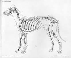 FileDog Anatomy Lateral Skeleton View
