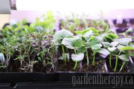 Grow Lamps For House Plants by Grow Light Shelving For Seed Starting Indoors Garden Therapy